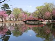 中央公園池周り