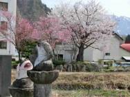 首なし地蔵と桜