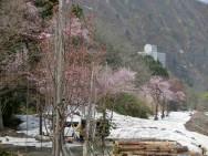 松川記念植樹