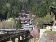 二居紅山桜遠景