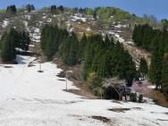 布場スキー神社桜