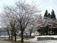 ルーデンス桜並木