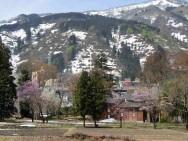 楽町桜風景