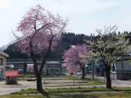 旧湯沢中央保育園