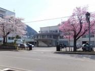 湯沢砂防桜