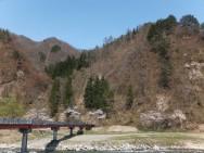 神弁橋桜風景