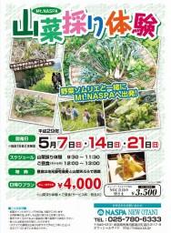 Mt.NASPA 山菜採り体験